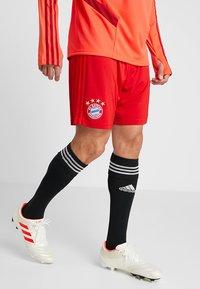 adidas Performance - FC BAYERN MÜNCHEN H SHO - Träningsshorts - red - 0