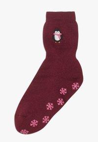 Falke - GIFTBOX PINGUIN CATPADS - Ponožky - chianti - 0