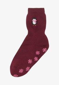 Falke - GIFTBOX PINGUIN CATPADS - Ponožky - chianti - 2