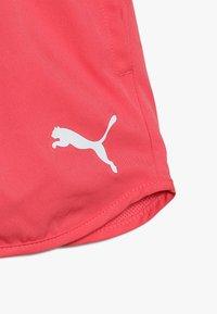 Puma - ACTIVE SHORTS - Pantaloncini sportivi - calypso coral - 4
