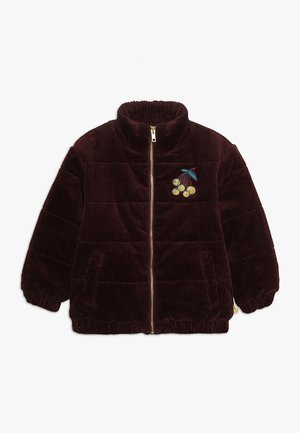 EVANDER JACKET - Winter jacket - bordeaux