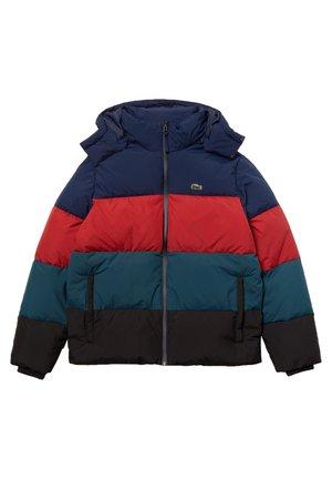 Winter jacket - bleu marine / bordeaux / bleu / noir