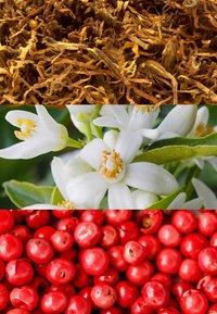 JOOP! Fragrances - HOMME WILD EAU DE TOILETTE - Eau de Toilette - - - 2