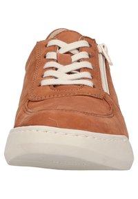 Softinos - Sneakersy niskie - tan - 4