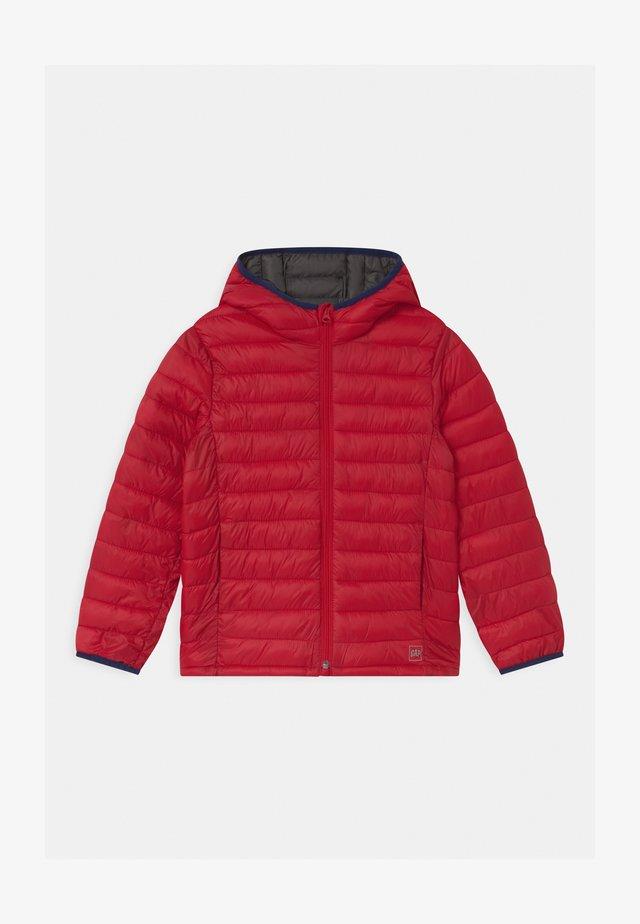 BOY PUFFER - Chaqueta de invierno - pure red