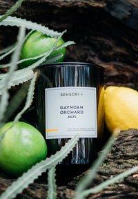 SENSORI+ - GAYNDAH ORCHARD 4625 - Scented candle - - - 1