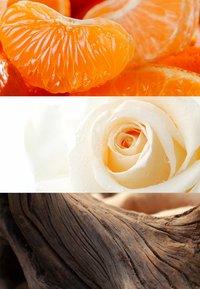 DAVIDOFF Fragrances - COOL WATER SEA ROSE EAU DE TOILETTE - Woda toaletowa - - - 2