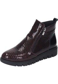 Piazza - Ankle boots - bordeaux - 1