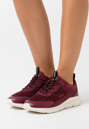 Sneakers basse - bordeaux red