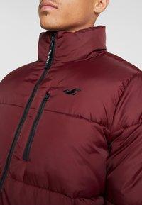 Hollister Co. - PUFFER MOCK BURG - Winter jacket - burgundy - 6