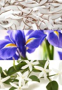 Lacoste Fragrances - L.12.12 POUR ELLE NATURAL EAU DE TOILETTE - Eau de Toilette - - - 2