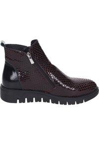 Piazza - Ankle boots - bordeaux - 5