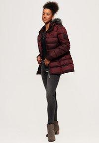 Superdry - TAIKO  - Winter jacket - purple - 1