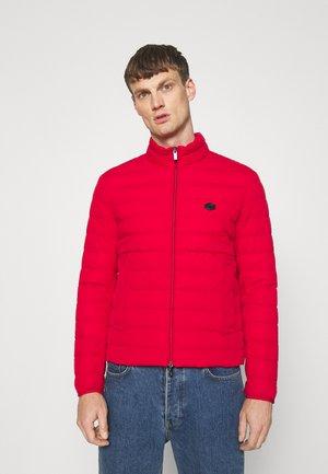DOWN JACKET - Down jacket - rosso piropo