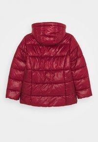 Levi's® - PUFFER - Winter jacket - cabernet - 2