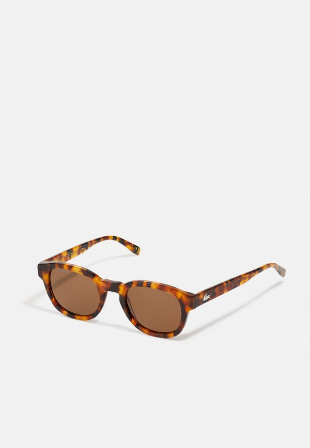 NATIONAL GEOGRAPHIC UNISEX - Lunettes de soleil - havana brown