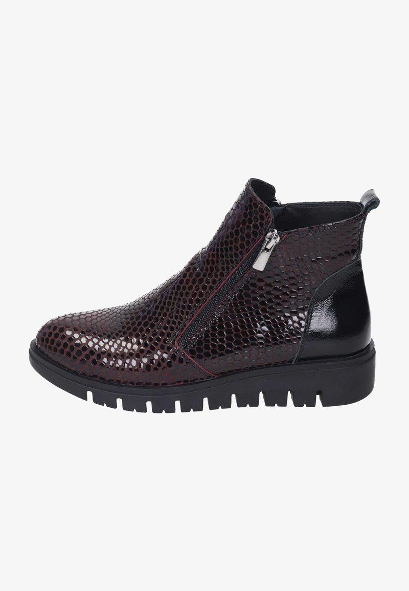 Piazza - Ankle boots - bordeaux