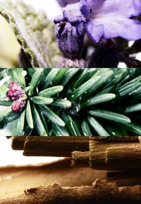DAVIDOFF Fragrances - RUN WILD FOR HIM EAU DE TOILETTE - Eau de Toilette - - - 2